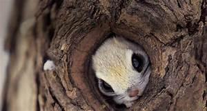 Squirrel hiding in a tree - Teh Cute