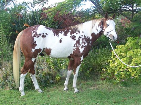 horses  sale giddee  horse trail rides