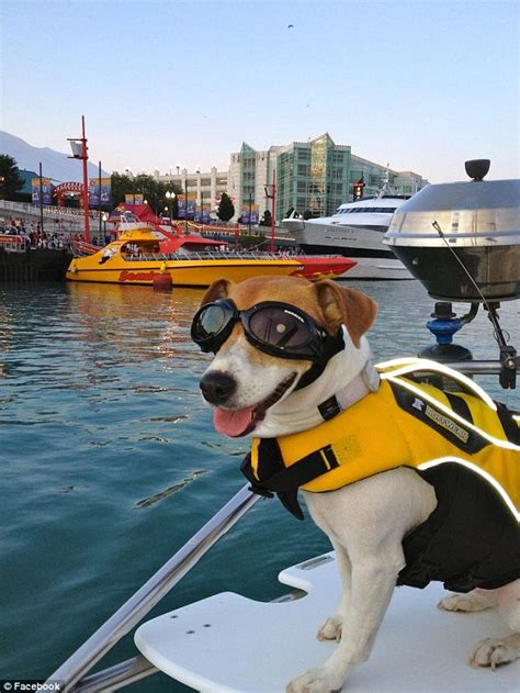 Boat Driving Or Riding by Meet Duma The Wakeboard Riding Speedboat Driving Jack