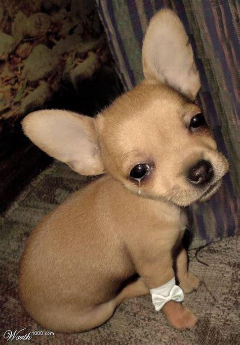 dog  world stop  dog crying