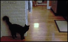 Cat Fail GIF - Find & Share on GIPHY