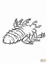 Coloring Parasite Louse Pages Drawing Supercoloring Printable sketch template