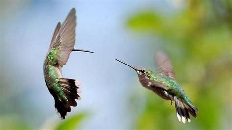 270 Hummingbird Hd Wallpapers  Background Images