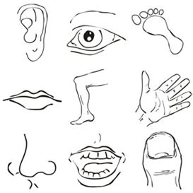 body images clip art body parts clipart  files