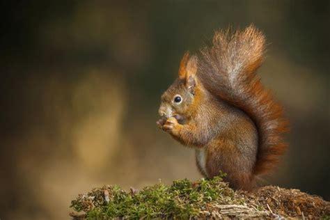 fun holiday squirrel appreciation day