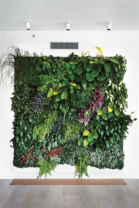 Pflanzen An Wand by 25 Best Ideas About Plant Wall On Wall