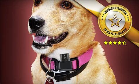 top  sprayhalsband fuer hunde vergleichssieger