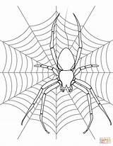 Spider Coloring Web Spiders Drawing Halloween Printable Webs Template Widow Colouring Simple Sketch Paper Getdrawings Spooky Cartoon Preschool Adult Draw sketch template
