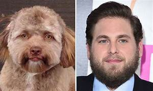 Dog with 'HUMAN FACE' shocks people who see striking ...