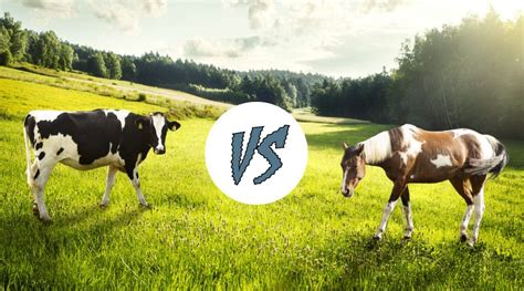 horses cows smarter than compare let subjective guess question think take very