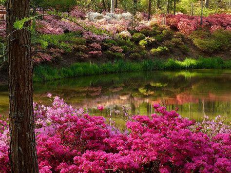 Spring Images Flower Garden Wallpaper And Background