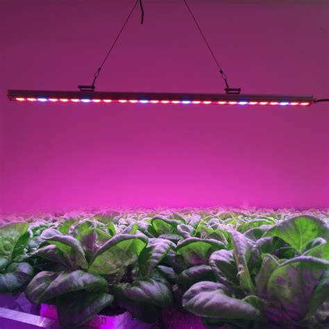 plant grow light l what is the distance between grow light and the pot plant