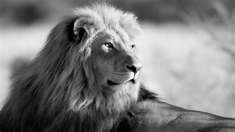Windows Wallpaper Animals - in black and white windows 10 wallpaper animals