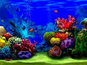 Beautiful Fish Wallpapers for Desktop - WallpaperSafari