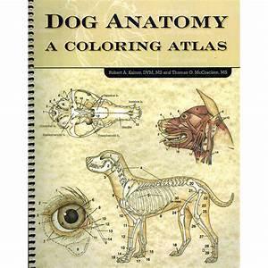 Dog  Male Dog Testicle Anatomy