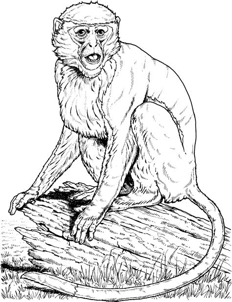 HD wallpapers swinging monkey coloring page