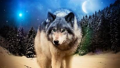 Photoshop Animals Wolf Wildlife Adobe Desktop Wallpapers