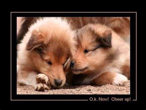 learn  animal motivational video youtube