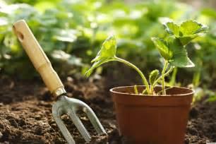 ponden home interiors may 39 s must do gardening carnon downs garden centre