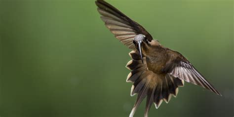why do hummingbirds fight hummingbirds use their beaks to stab each other but they