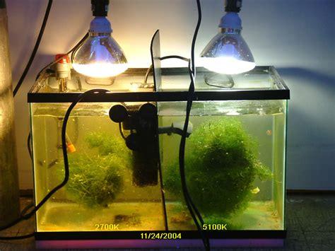 refugium led grow lights an inexpensive refugium bulb melev 39 s reef