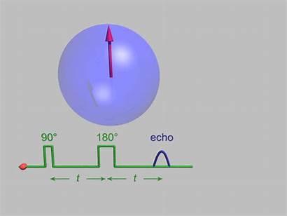 Spin Echo Wikipedia Nmr Resonance Animation Nuclear