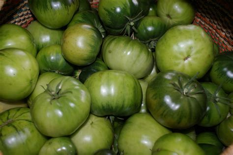 green tomatoes the barefoot gardener time to say goodbye