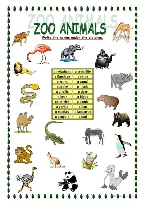 zoo animals english esl worksheets  distance learning