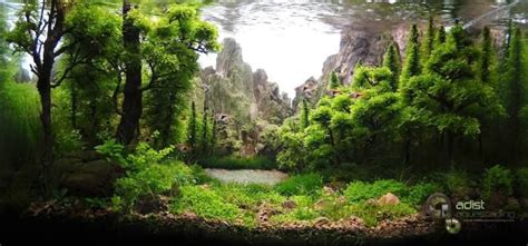 mountain aquascape woodlands lake mountain aquascape beautifully planted