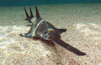 endangered species  great barrier reef