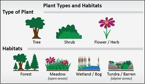 different types of plants identifying plants plantwatch