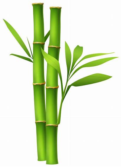 Bamboo Clipart Elements Decorative Transparent Yopriceville 1063