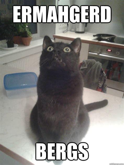Berks Meme - ermahgerd bergs berks cat quickmeme