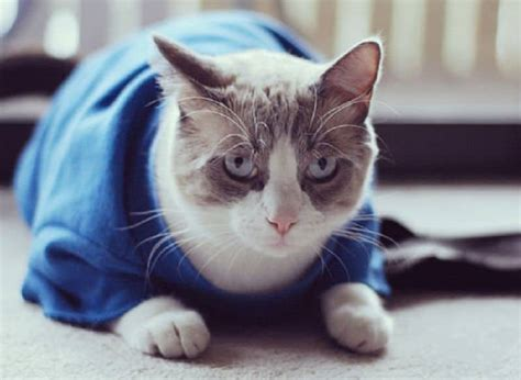 adorable outfits diy cat clothing   furry friend