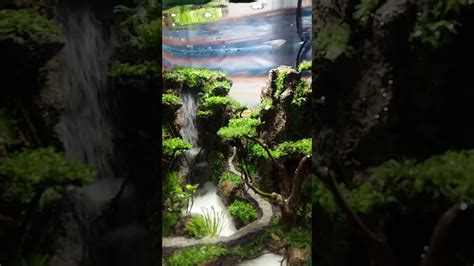 Dengan aquarium mampu menghadirkan nuansa alam kedalam rumah. Aquarium unik - YouTube
