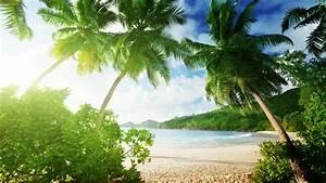 Tropical beach, palm trees, sand, sea, coast, clouds ...