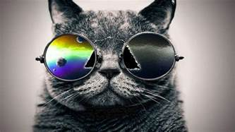 cool cats cool cat backgrounds wallpaper cave