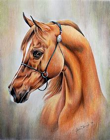 Horse Art Drawings Paintings