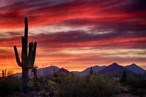 Red Hot Sonoran Sunset Photograph by Saija Lehtonen