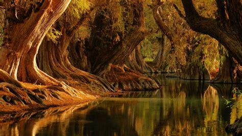 lago de camecuaro national park municipality