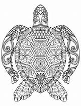 Coloring Adults Animal Pages Turtle sketch template