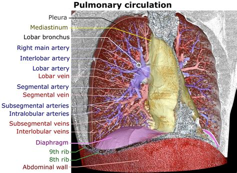 Wiki Lung Upcscavenger