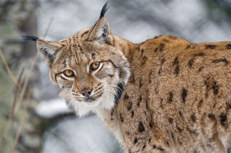 Photos Wonderful Animals You Find Belgium