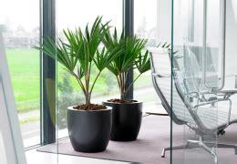 plante pour le bureau aménagement intérieur pour bureau aude plantes la nature