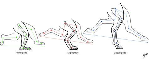 legs walking length across anthro stride locomotion comparison anatomica knee energy metatarsals represented femurs equal above
