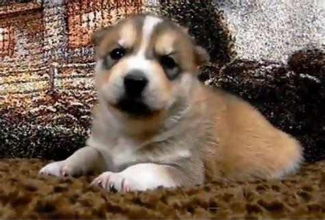 recopilacion de  divertidos de animales bebes mascotas