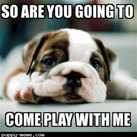 Bulldog Memes - bored bulldog