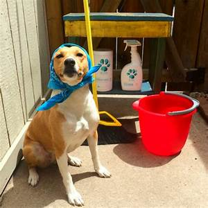 rubicon days pet friendly spring cleaning giveaway with pl360 With dog cleaning house