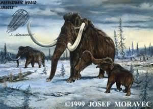 wooly mammoth, ice age animals, mammoth, pleistocene