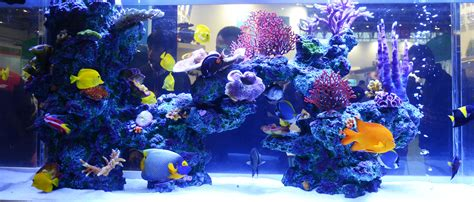 marine sources all in one marine aquarium asd 350 350 350 300mm 37l aquarium supplies